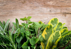 Freshly harvested herbs over wooden background. Royalty Free Stock Photos