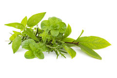 Freshly harvested herbs Stock Image
