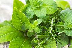 Freshly harvested herbs Stock Images