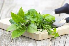 Freshly harvested herbs Stock Photo