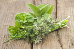 Freshly harvested herbs Royalty Free Stock Photo