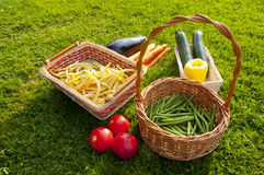 Freshly harvested home grown vegetables lying on grass Royalty Free Stock Photo
