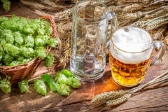 Freshly harvested hop cones and cold beer Royalty Free Stock Photo