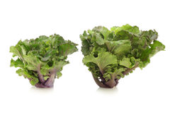 Freshly harvested kale sprouts Stock Photo