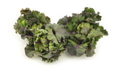 Freshly harvested kale sprouts Stock Image