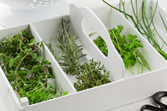 Freshly harvested kitchen herbs from the garden Royalty Free Stock Photo