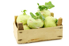 Freshly harvested kohlrabi with some foliage Stock Photo