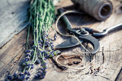 Freshly harvested lavender Royalty Free Stock Photos