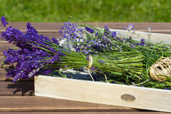 Freshly harvested lavender Royalty Free Stock Photography