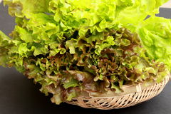 Freshly harvested lettuce. Delicious fresh lettuce to salad Royalty Free Stock Photo