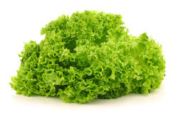 Freshly harvested Lollo Bionda lettuce Royalty Free Stock Photography