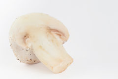 Freshly harvested mushroom Agaricus bisporus. Isolated in white background Stock Photos