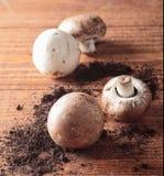 Freshly harvested mushrooms Stock Images