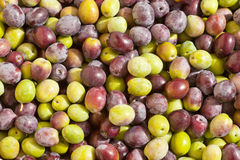 Freshly Harvested Olives Background Royalty Free Stock Photography