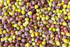 Freshly Harvested Olives Background Stock Image