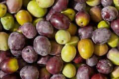 Freshly Harvested Olives Background Stock Photos