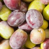 Freshly Harvested Olives Background Royalty Free Stock Photos
