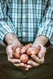 Freshly harvested onion Stock Photos