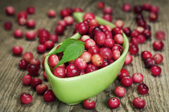 Freshly harvested organic red Cranberries Royalty Free Stock Photos