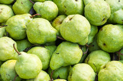 Freshly harvested pears on display Royalty Free Stock Photos