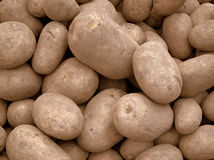 Freshly harvested potatoes Stock Photography