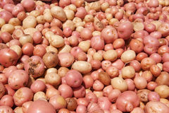 Freshly harvested Potatoes Stock Images