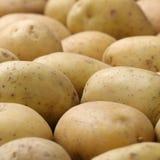 Freshly harvested potatoes Stock Image