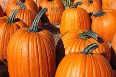 Freshly harvested pumpkins Stock Image