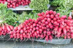 Freshly harvested, purple colorful radish in market. Growing radish. Growing vegetables Royalty Free Stock Photo