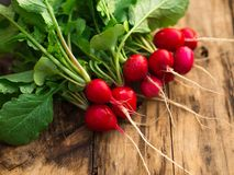 Freshly harvested, purple colorful radish on the wooden table. Growing radish. Growing vegetables Stock Photography