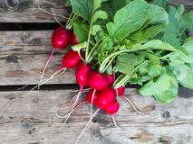 Freshly harvested, purple colorful radish on the wooden table. Growing radish. Growing vegetables. Freshly harvested, purple colorful radish on the wooden table Royalty Free Stock Image