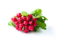 Freshly harvested radishes Royalty Free Stock Image