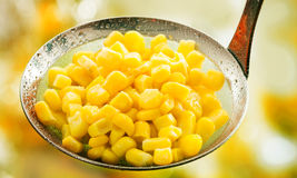 Freshly harvested ripe cooked corn kernels Royalty Free Stock Photography