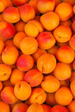 Freshly harvested ripen Apricots in Europe Royalty Free Stock Photos