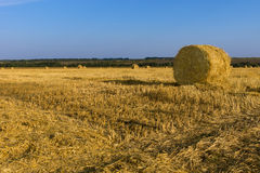 Freshly harvested round hay bales Stock Photos