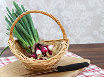 Freshly harvested spring onion in a basket with copy space. Stock Photo