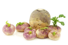 Freshly harvested spring turnips Royalty Free Stock Photography