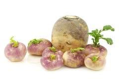 Freshly harvested spring turnips Royalty Free Stock Photography