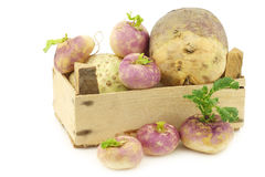 Freshly harvested spring turnips Royalty Free Stock Photo