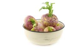 Freshly harvested spring turnips (Brassica rapa) Royalty Free Stock Image
