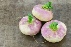 Freshly harvested spring turnips Brassica rapa. On a grungy metal background royalty free stock images