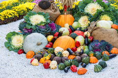 Freshly harvested summer vegetables among flower beds. Large autumn harvest composition outdoor. Royalty Free Stock Photos