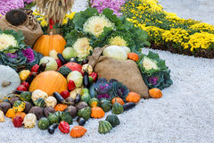 Freshly harvested summer vegetables among flower beds. Large autumn harvest composition outdoor. Royalty Free Stock Images
