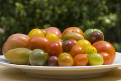 Fresh garden tomatoes Royalty Free Stock Photos