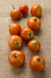 Freshly harvested tomatoes from organic farming Stock Photography