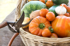 Freshly harvested vegetables Stock Image