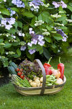 Freshly harvested vegetables Stock Photo