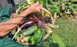 Freshly harvested vegetables Royalty Free Stock Image