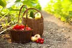Freshly harvested vegetables Stock Images