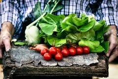 Freshly harvested vegetables Stock Photo